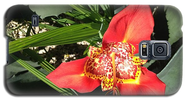 Mexican Orchid Galaxy S5 Case by Matthew Bamberg