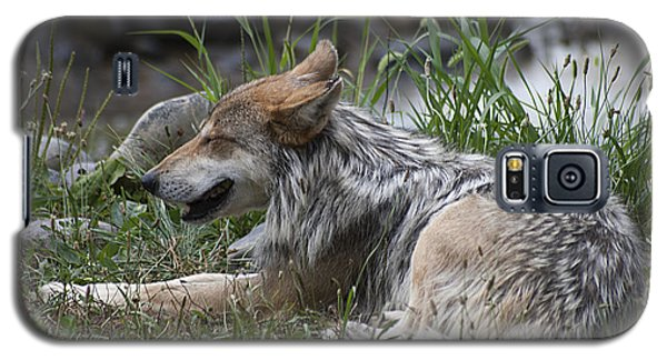 Galaxy S5 Case featuring the photograph Mexican Wolf 20120714_112a by Tina Hopkins