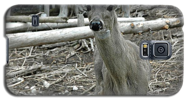 Galaxy S5 Case featuring the photograph Michigan White Tail Deer by LeeAnn McLaneGoetz McLaneGoetzStudioLLCcom