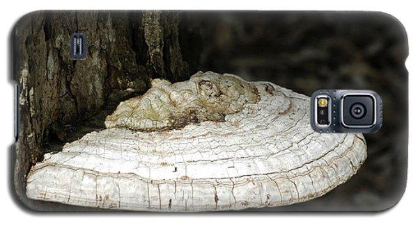 Galaxy S5 Case featuring the photograph Michigantree Fungi by LeeAnn McLaneGoetz McLaneGoetzStudioLLCcom