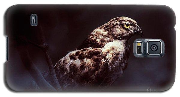 Hawk Galaxy S5 Case - Midnight Hawk by Jorgo Photography - Wall Art Gallery