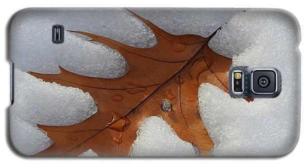 Mighty Oak Galaxy S5 Case