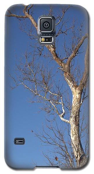 Mighty Tree Galaxy S5 Case