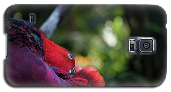 Miksang 4 Parrot Galaxy S5 Case by Theresa Tahara