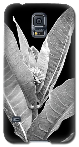 Galaxy S5 Case featuring the photograph Milkweed Black And White by Christina Rollo