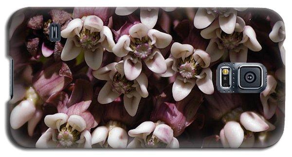 Milkweed Florets Galaxy S5 Case