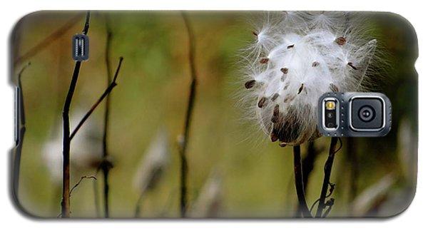 Milkweed In A Field Galaxy S5 Case