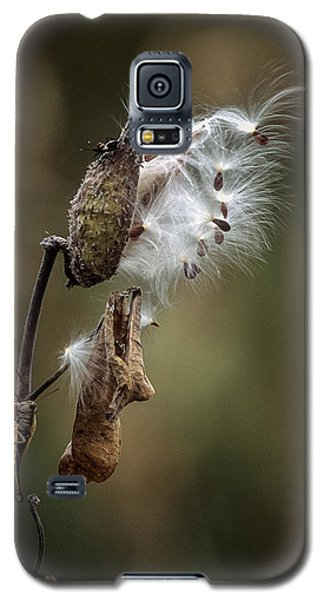 Milkweed Plant Dried And Blowing In The Wind Galaxy S5 Case