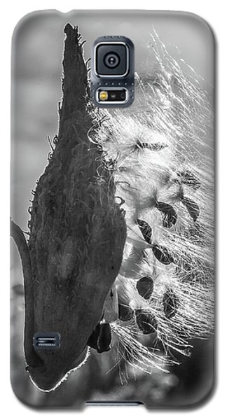 Milkweed Pod Back Lit B And W Galaxy S5 Case
