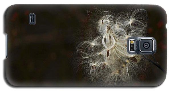 Galaxy S5 Case featuring the photograph Milkweed Pod by Elsa Marie Santoro