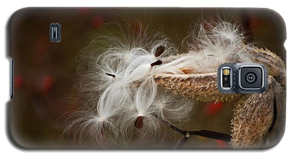 Galaxy S5 Case featuring the photograph Milkweed Pods by Elsa Marie Santoro