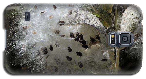 Milkweed Seeds Emerging Galaxy S5 Case