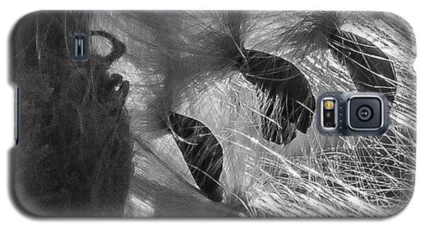 Milkweed Sunburst In Black And White Galaxy S5 Case