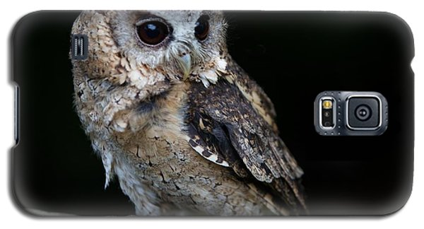 Galaxy S5 Case featuring the photograph Minature Owl by Gary Bridger