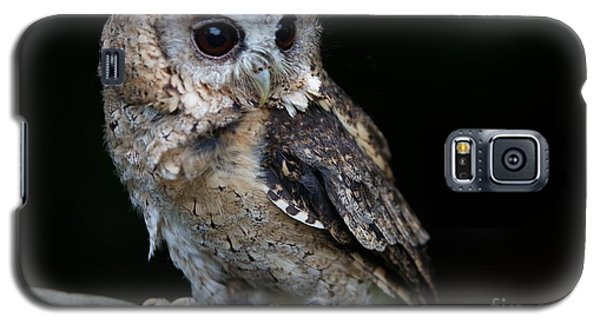 Minature Owl Galaxy S5 Case by Gary Bridger