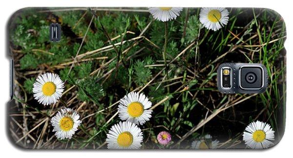 Mini Daisies Galaxy S5 Case