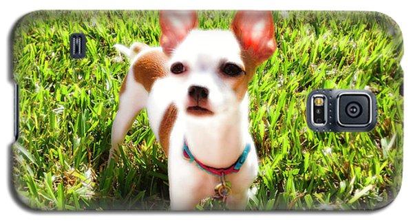Mini Dog Galaxy S5 Case