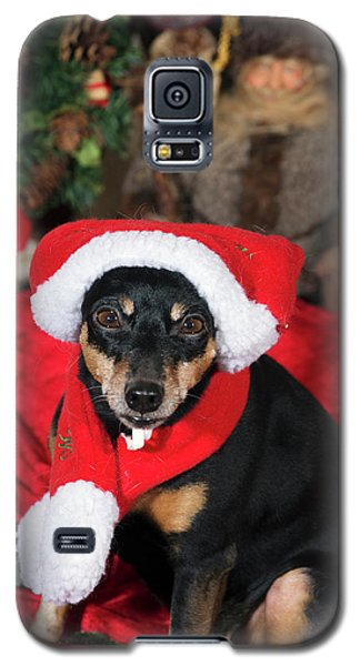 Galaxy S5 Case featuring the photograph Miniature Pinscher Wishing A Merry Christmas by Christian Lagereek