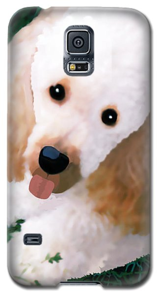 Miniature Poodle Albie Galaxy S5 Case by Marian Cates