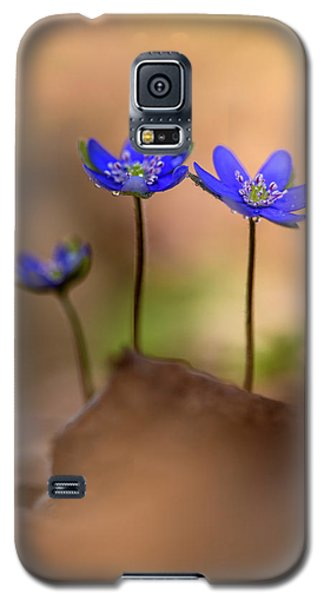 Galaxy S5 Case featuring the photograph Minimalistic Impresion With Liverworts by Jaroslaw Blaminsky