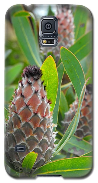 Mink Protea Flower Galaxy S5 Case by Rebecca Margraf