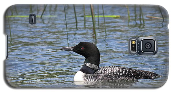 Galaxy S5 Case featuring the photograph Minnesota State Bird by Penny Meyers