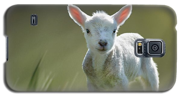 Minnie The Spring Lamb Galaxy S5 Case