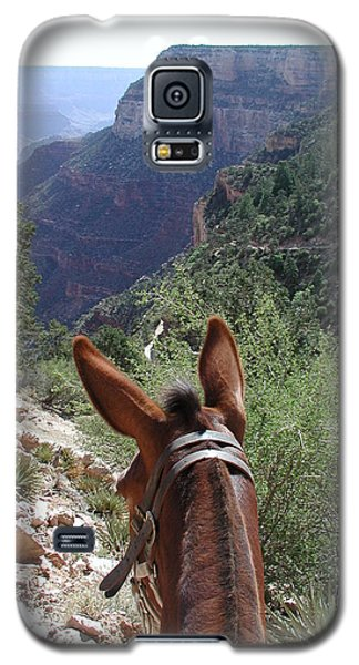 Galaxy S5 Case featuring the photograph Miss Ann  by Nancy Taylor