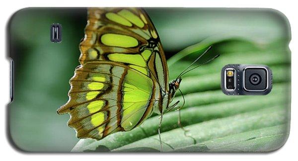 Miss Green Galaxy S5 Case by Nick Boren