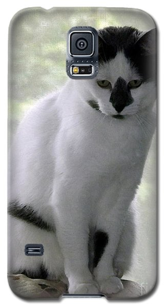 Miss Jerrie Cat With Watercolor Effect Galaxy S5 Case