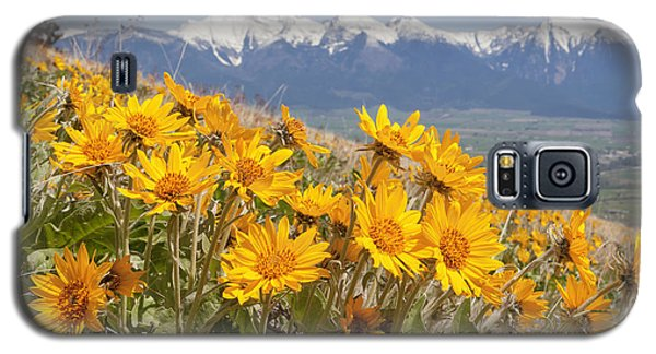 Mission Mountain Balsam Blooms Galaxy S5 Case by Jack Bell