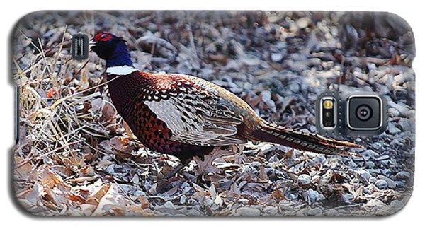 Missouri  Pheasant Galaxy S5 Case