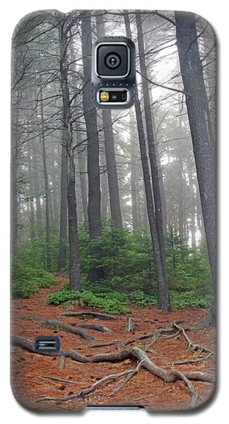 Misty Morning In An Algonquin Forest Galaxy S5 Case