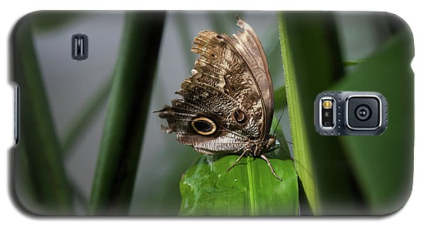 Galaxy S5 Case featuring the photograph Misty Morning Owl by Karen Wiles