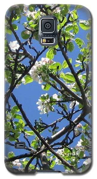 Galaxy S5 Case featuring the photograph Mn Apple Blossoms by Barbara Yearty