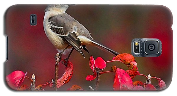 Mockingbird On Red Galaxy S5 Case