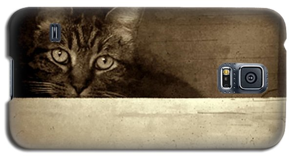 Mollie In A Box Galaxy S5 Case by Patricia Strand