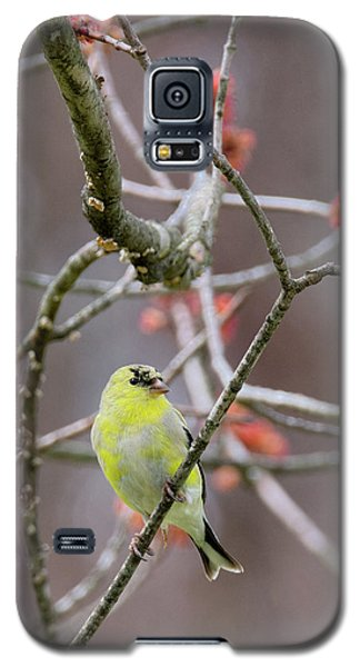 Galaxy S5 Case featuring the photograph Molting Gold Finch by Bill Wakeley