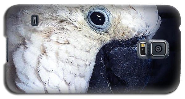 Moluccan Cockatoo Galaxy S5 Case by Melissa Messick