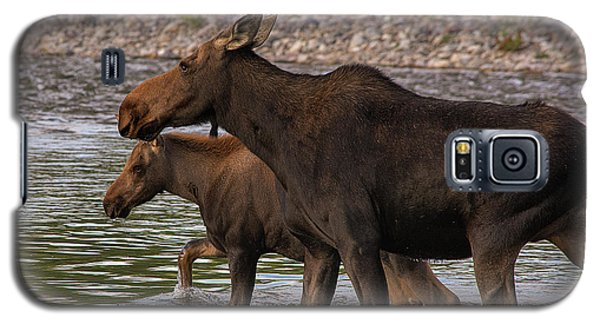 Galaxy S5 Case featuring the photograph Mom And Baby Moose River Crossing by Mary Hone