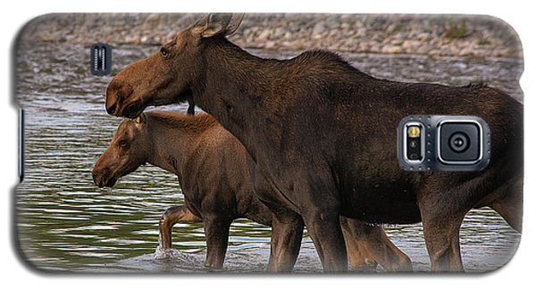 Mom And Baby Moose River Crossing Galaxy S5 Case by Mary Hone