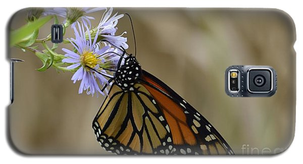 Galaxy S5 Case featuring the photograph Monarch 2015 by Randy Bodkins