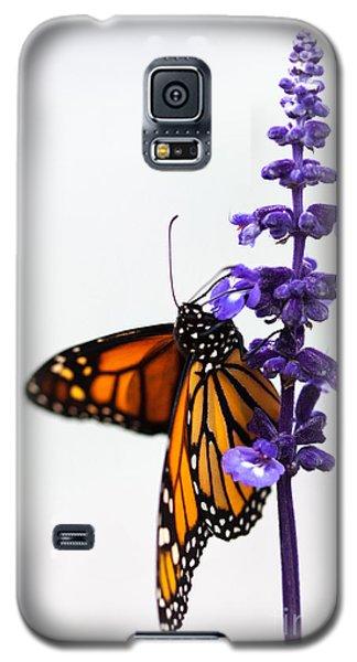 Monarch Butterfly Galaxy S5 Case by Ana V Ramirez