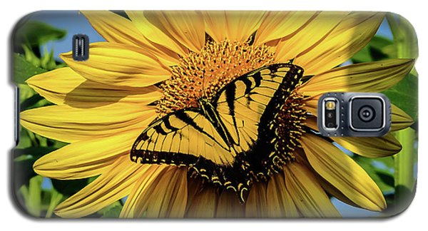 Male Eastern Tiger Swallowtail - Papilio Glaucus And Sunflower Galaxy S5 Case