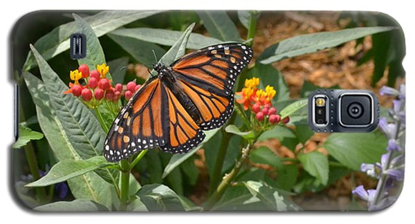Galaxy S5 Case featuring the photograph Monarch Butterfly by Carol  Bradley