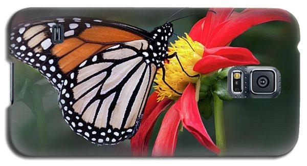 Monarch  Butterfly Enjoying A Dahlia Galaxy S5 Case