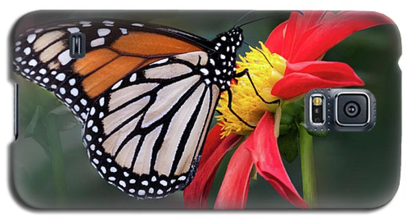 Monarch  Butterfly Enjoying A Dahlia Galaxy S5 Case