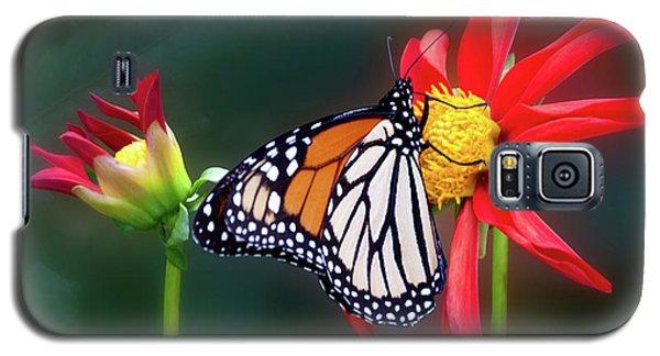 Monarch Butterfly Feasting On Dahlia 'kkk Katie' Galaxy S5 Case