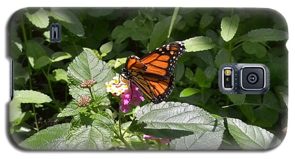 Galaxy S5 Case featuring the photograph Monarch Butterfly Feeding by Carol  Bradley