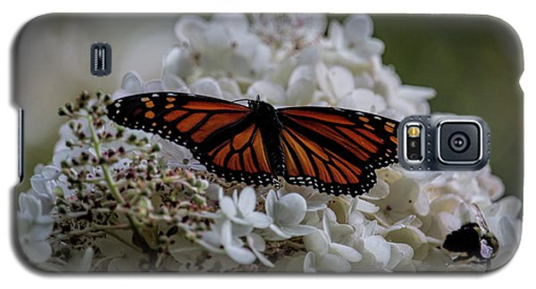 Monarch Butterfly Feeding On Hydrangea Tree Galaxy S5 Case